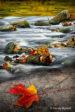 November 2018   Autumn Red Leaf   Randy Nyhoff