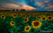 September 2018 | Sunflower Sunset | Christine Darnell