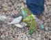 Budgies congregating on Jeanne Quillan's shoes
