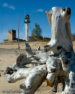 Whitefish Point Light Tower And Driftwood 2
