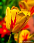 Spring Gallery