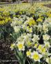 Flowers 010 by Jan Lewis