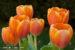 Flowers 134 by Jan Lewis
